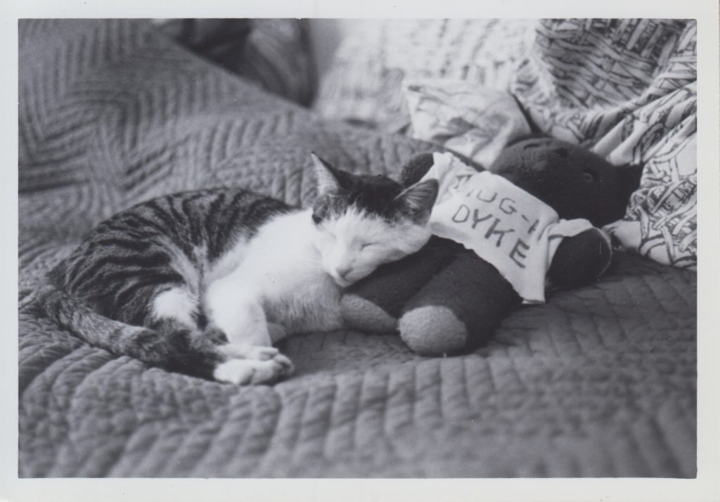 """A black-and-white photograph of a tabby cat with a white face and chest sleeping against a stuffed animal who wears a shirt that reads """"hug a dyke."""""""